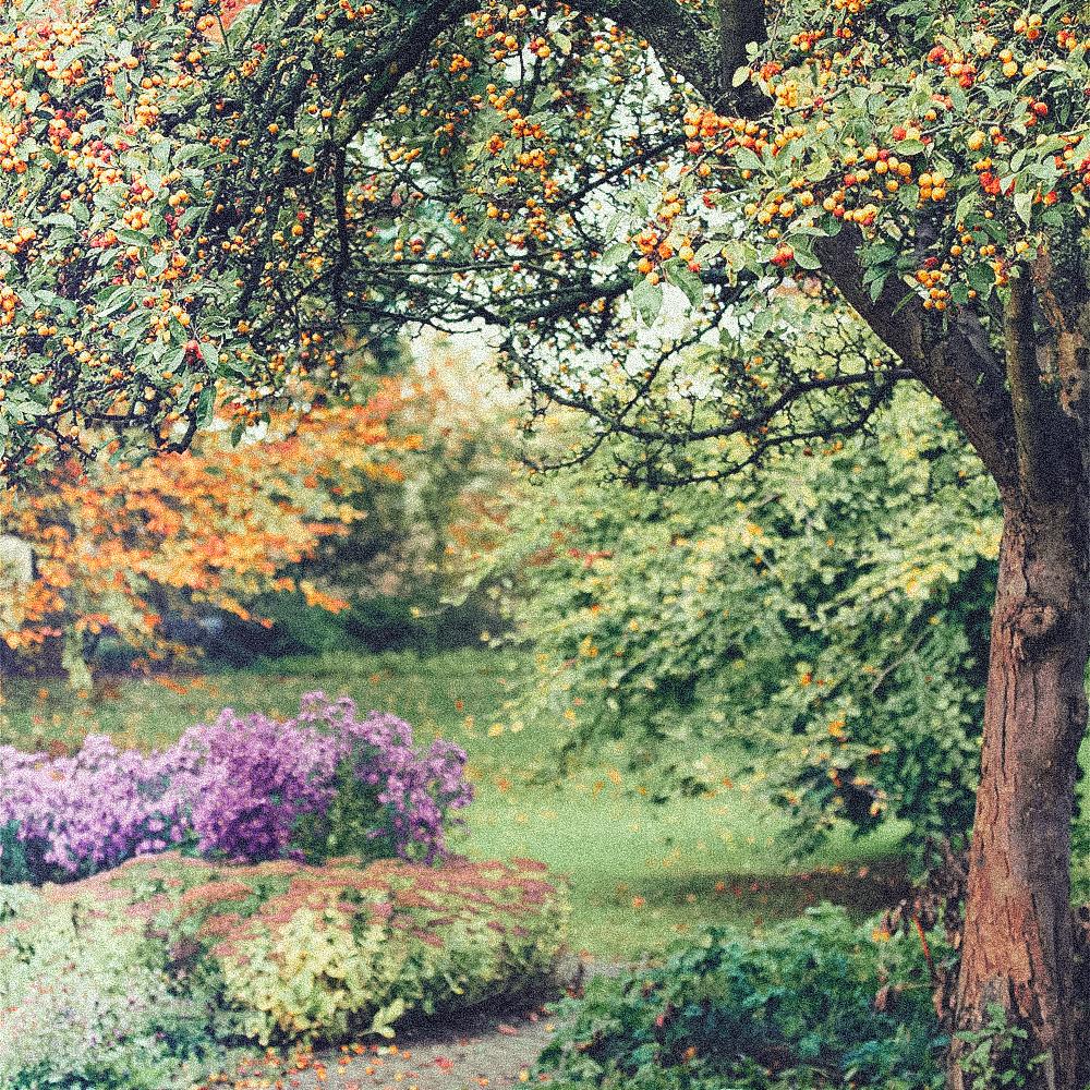 Herbstweh.