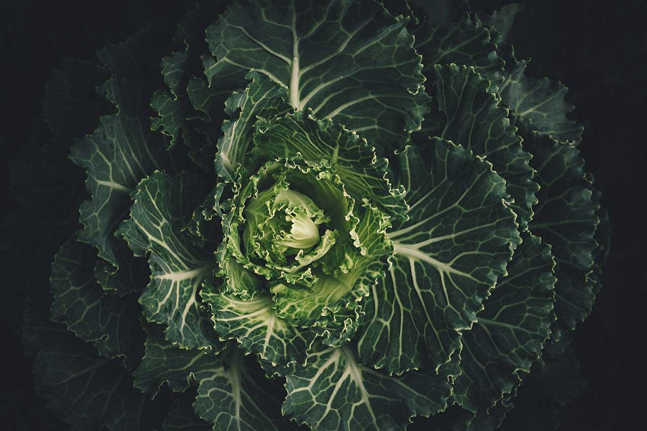 wie viel obst und gemuese salat
